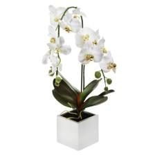 Cubo com Phalaenopsis